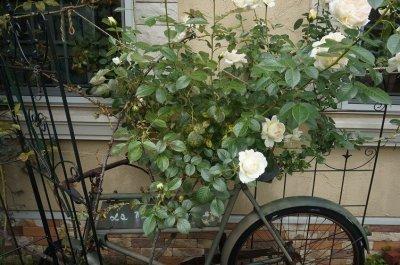 画像2: バラに覆われた看板になった自転車